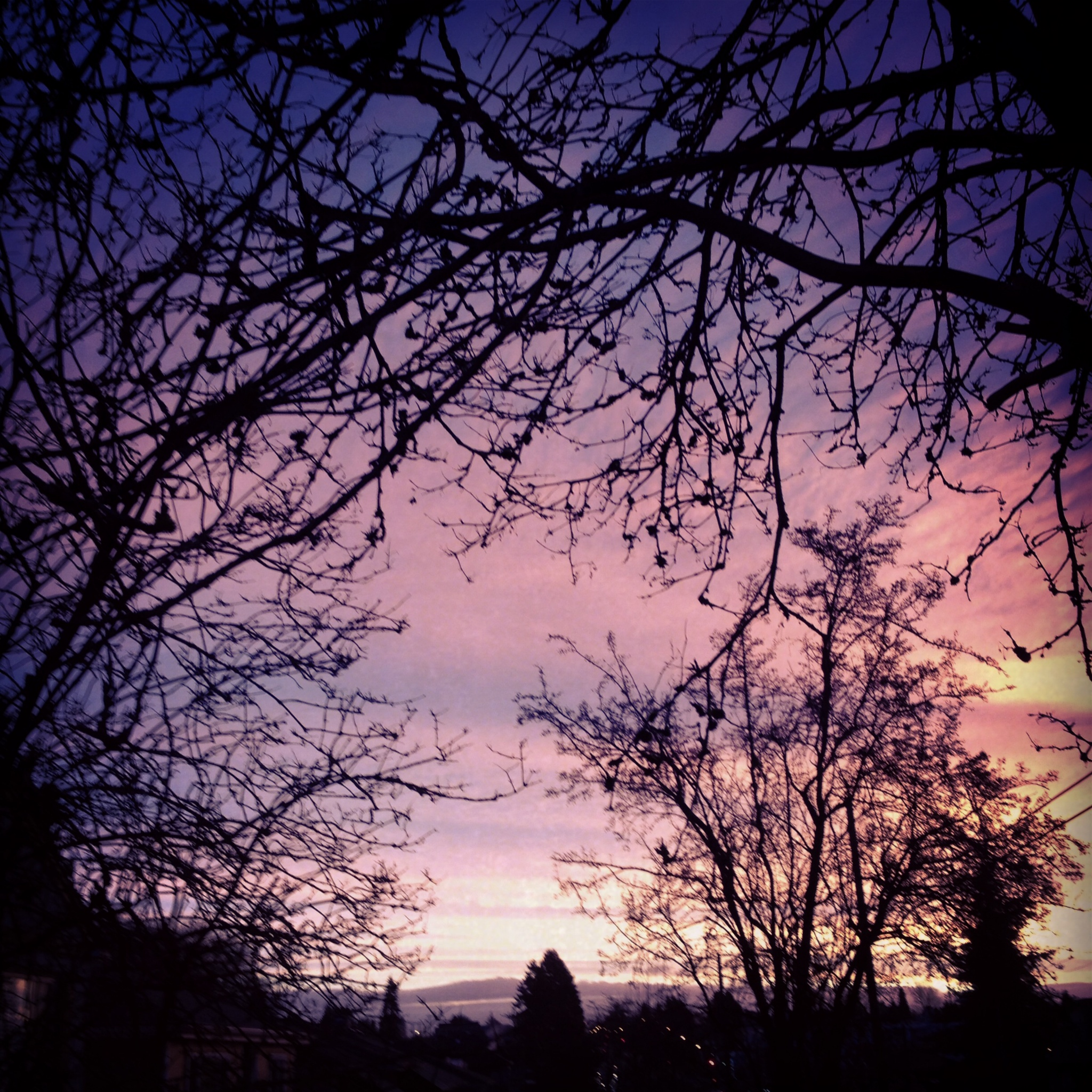 thorny pink sky